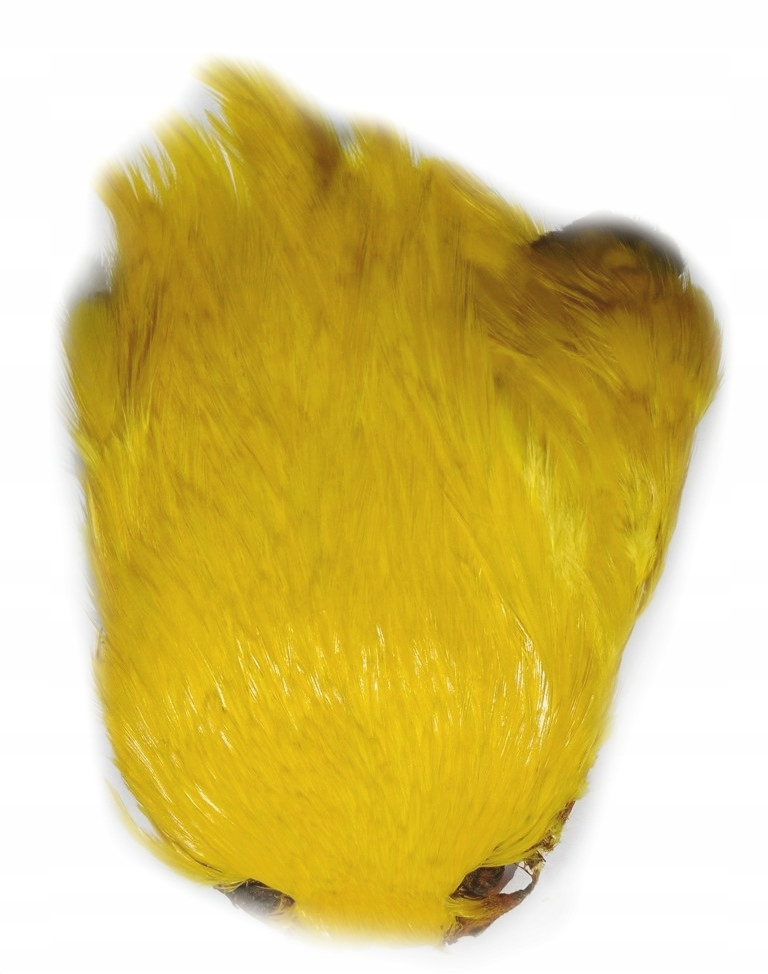 Kapka szyjna koguta żółta barwiona, pióra koguta