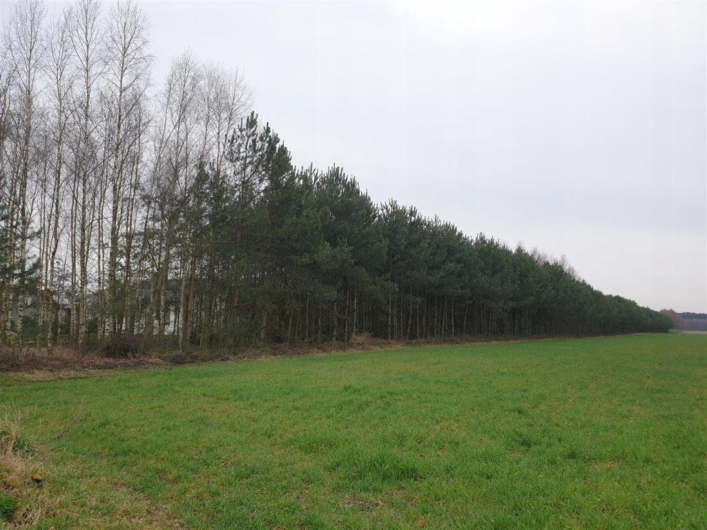Działka, Borki Prusinowskie, 10300 m²