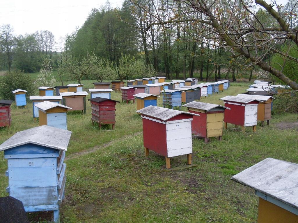 Pszczoly Ule Z Pszczolami Rojki Odklady Pszczele 9251448261 Oficjalne Archiwum Allegro
