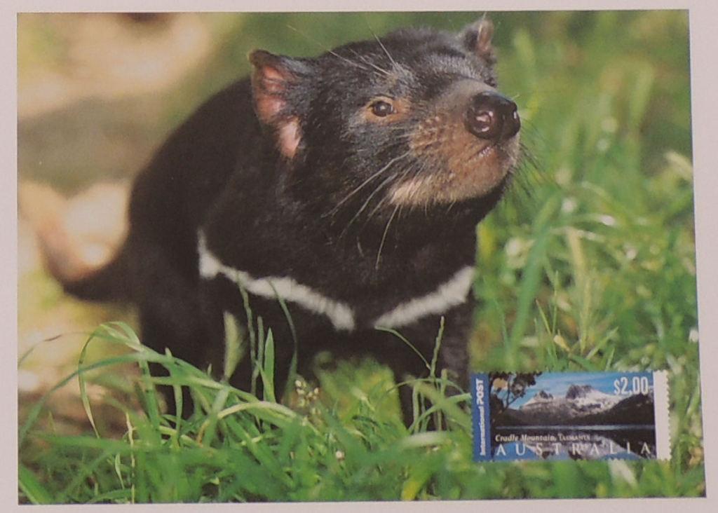 Pozdrowienia z Australii - kartka poczt diabeł tas