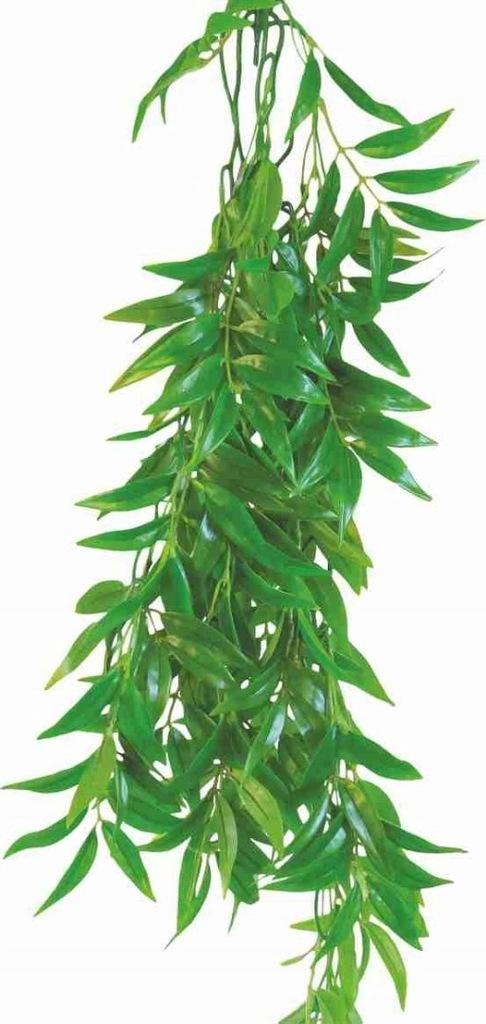 Roślina do terrarium Ficus Longifolia Happet 50cm