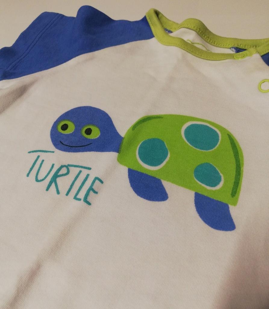 Bodziak z żółwiem - Cocodrillo Underwear