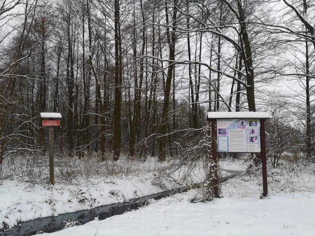 Działka, Ligota Mała, Oleśnica (gm.), 3123 m²