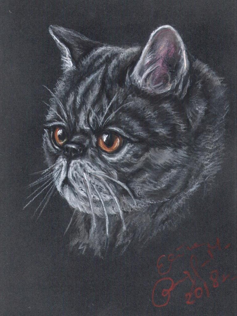 Kot egzotyczny - portret kota