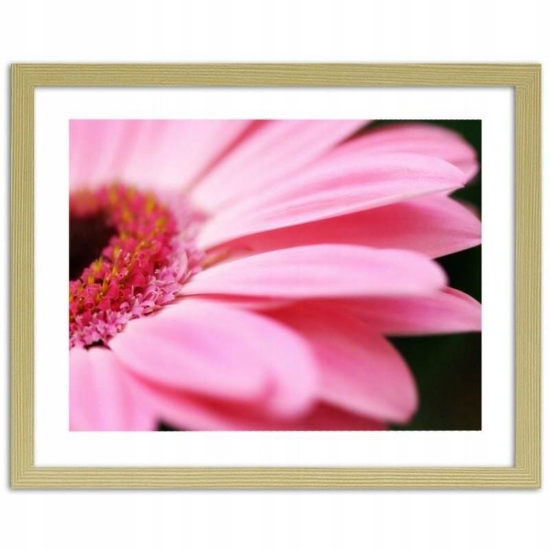 Obraz w ramie naturalnej Różowy gerber 80x60