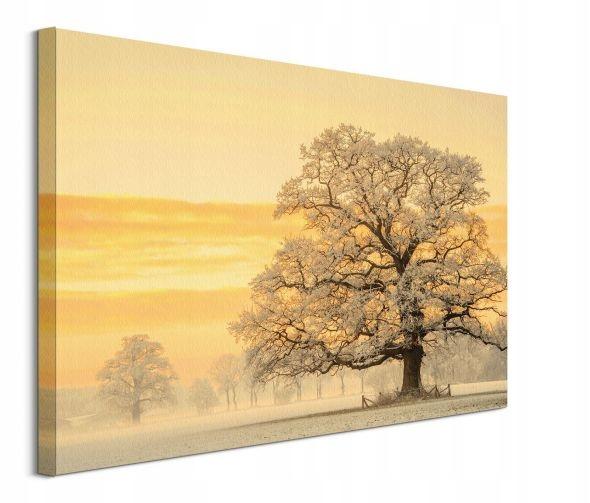 Winter Light - obraz na płótnie 80x60 cm