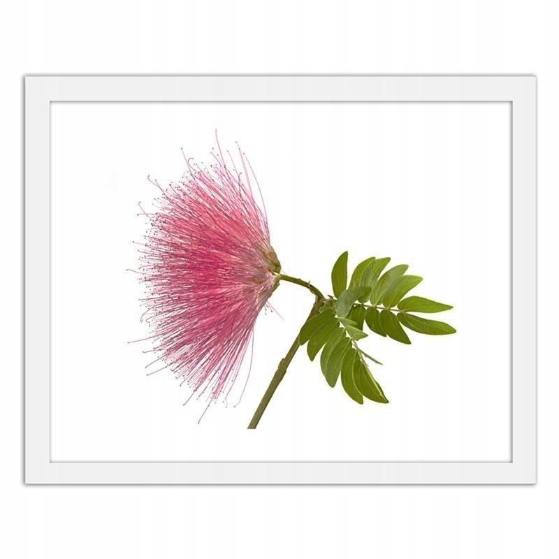 Obraz w ramie białej Różowy kwiat 2 80x60