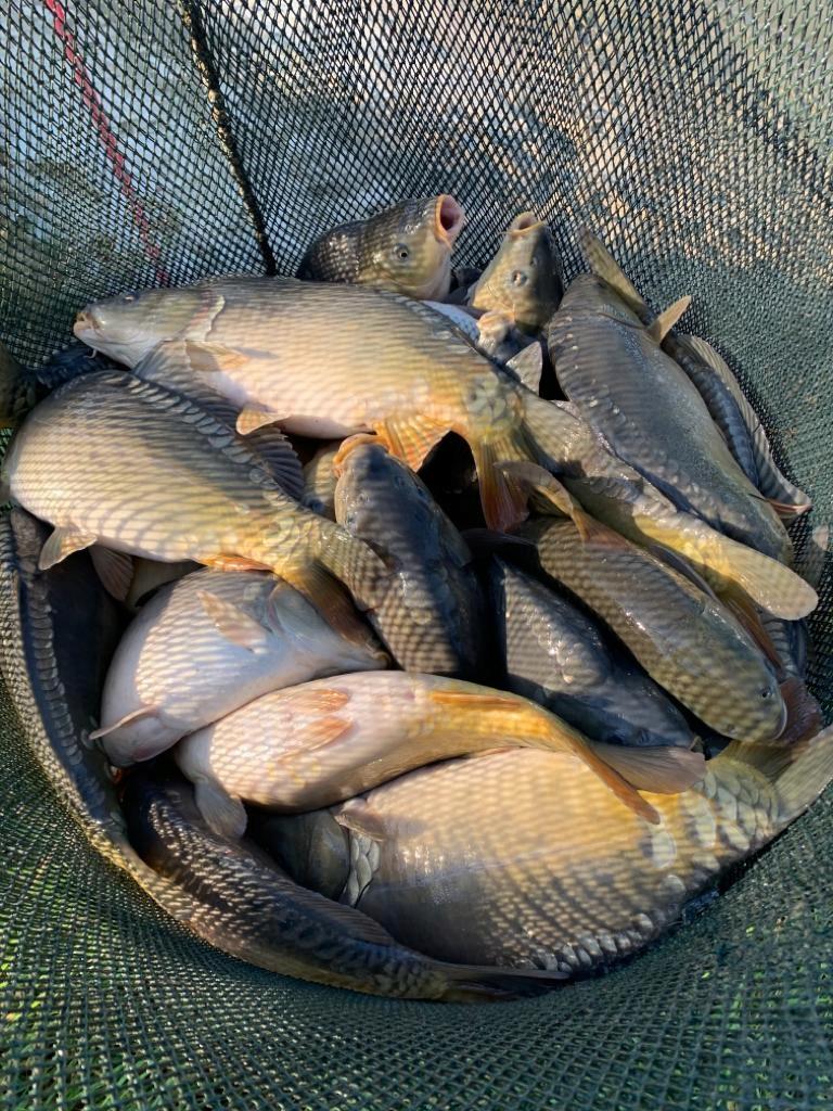 Sprzedam ryby
