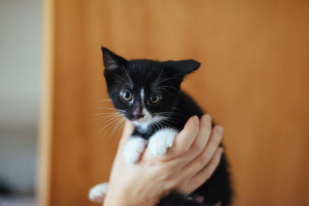 Koty tez zbieraja na WOSP