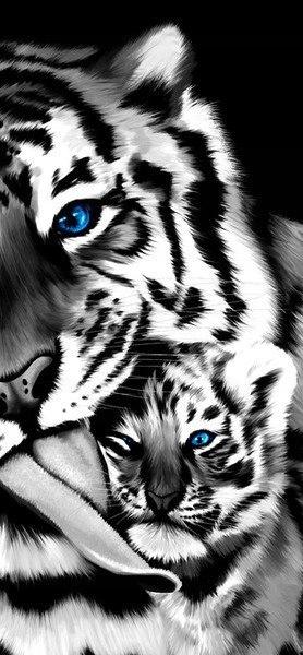 Okleina Małe tygrysiątko obraz