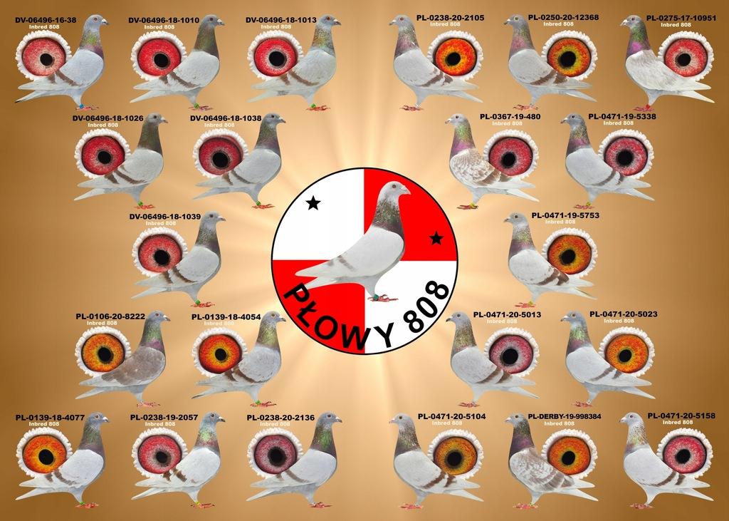 Paszki młode 2021
