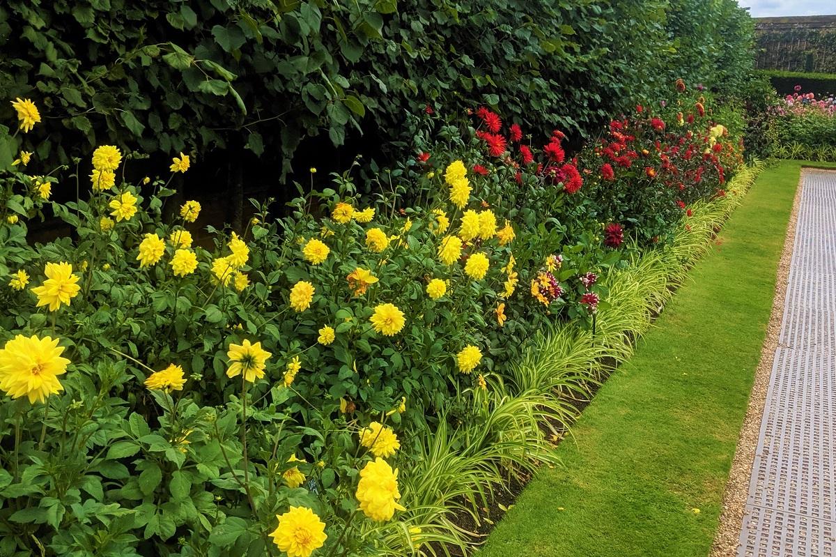 Kwiaty Wieloletnie Ktore Sadzimy Na Wiosne Allegro Pl