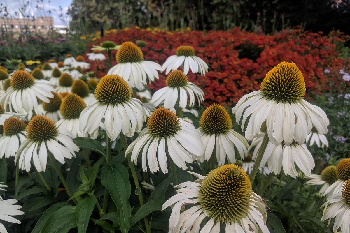 Rośliny na kwiat cięte.