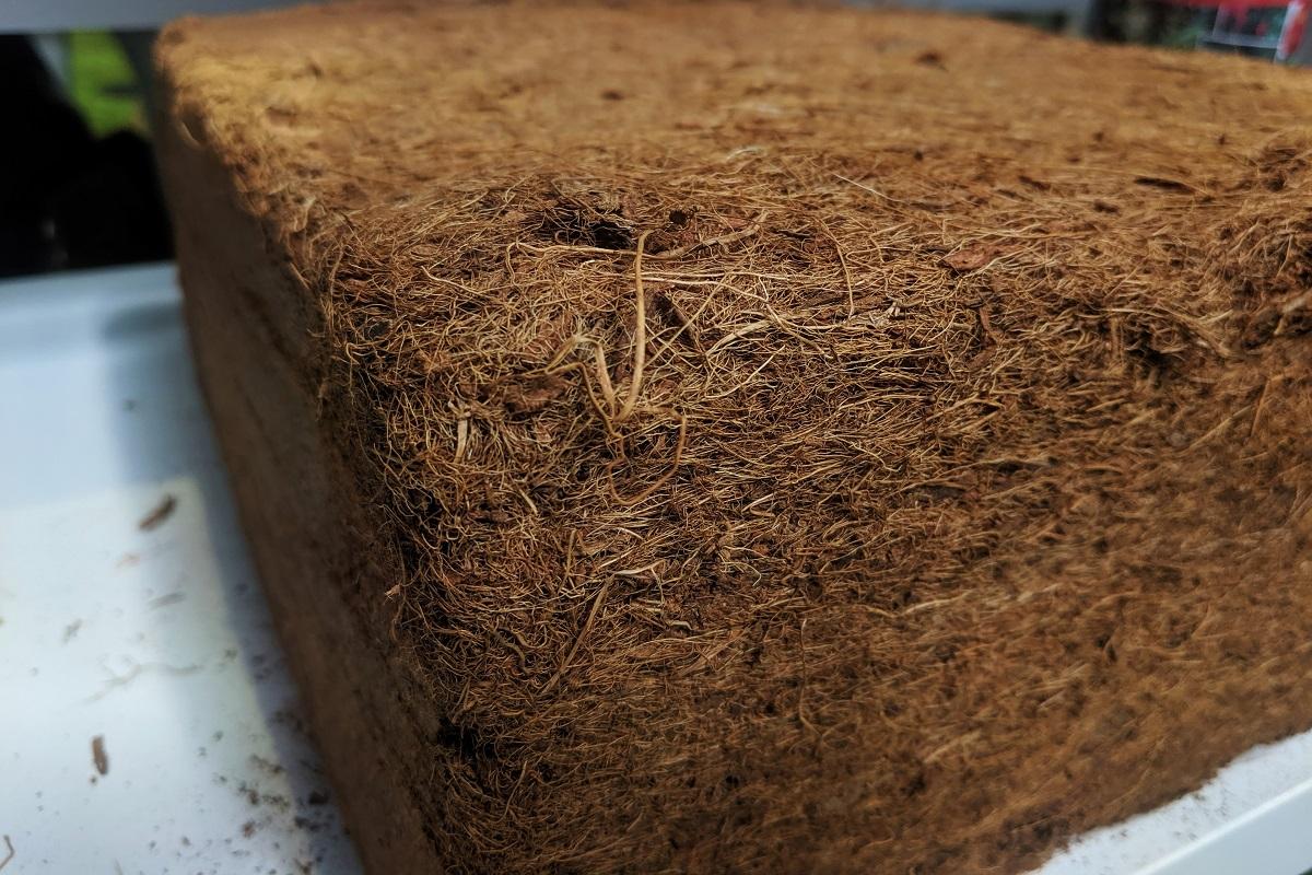 Sprasowane włókno kokosowe w formie kostki do wysiewu nasion.