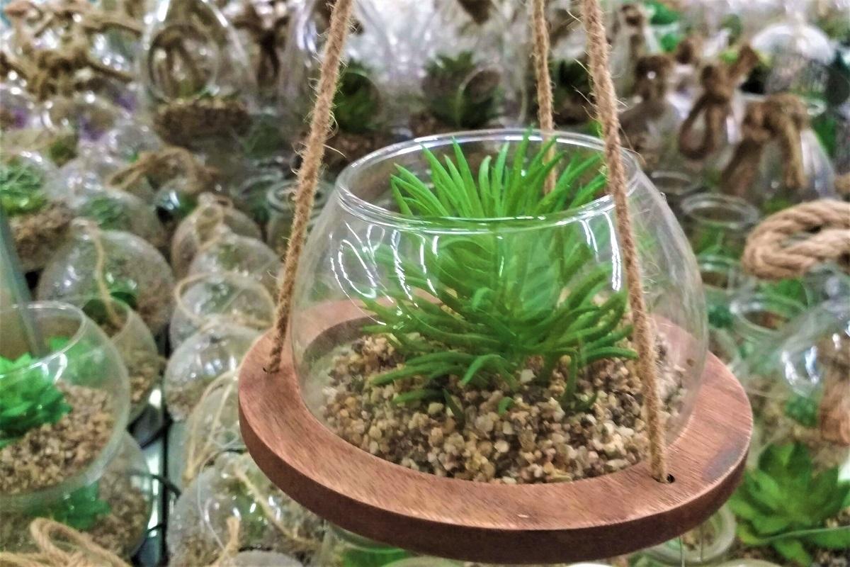 rastliny 3