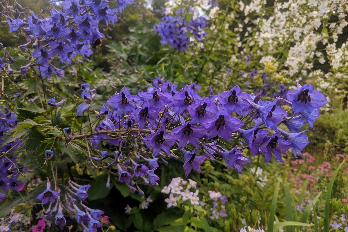 Kontakt z naturą- kwiaty w ogrodzie