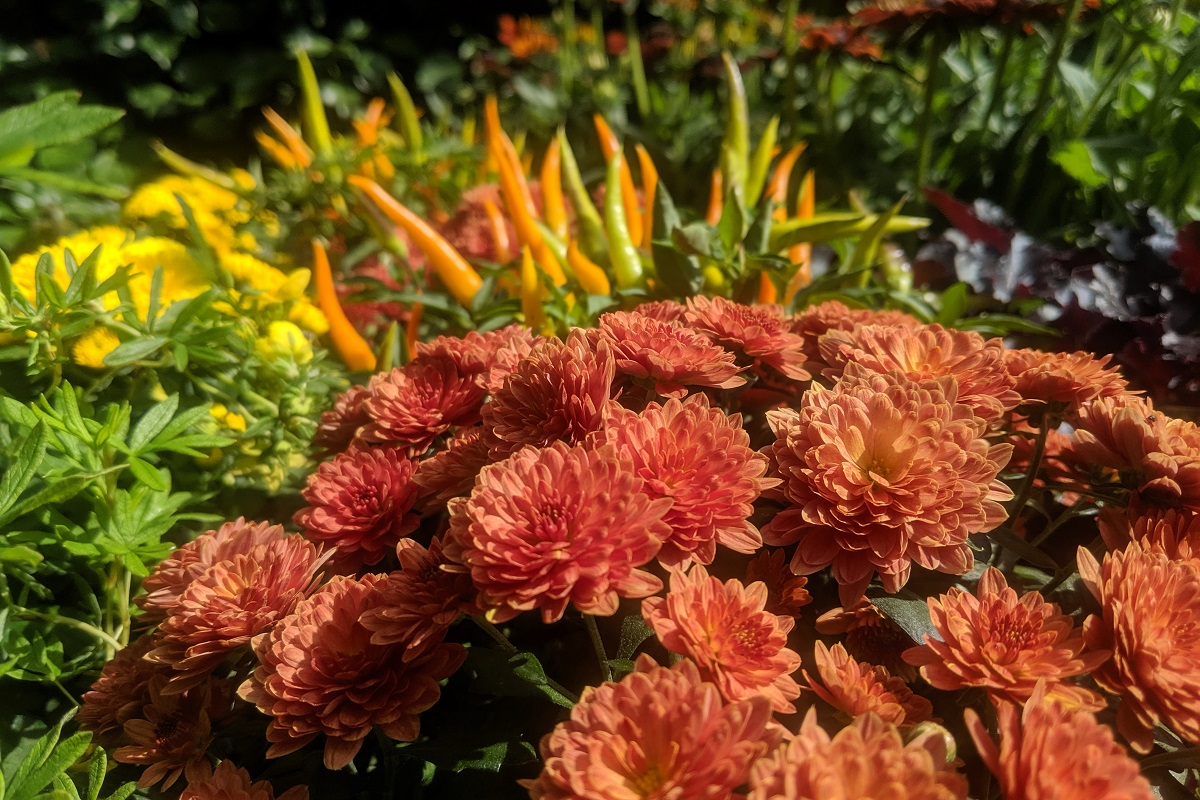 Kolorowe kwiaty o różnej fakturze.