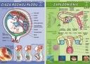 Ciąża i rozwój płodu+Zapłodnienie plansze BIOLOGIA
