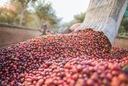 Лимонная ETHIOPIA кофе ? зернах 1кг свежий !