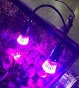 LAMPA ŻARÓWKA LED GROW DOŚWIETLANIE ROŚLIN 2x10W Kod produktu b/d