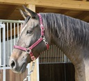 80f41109941a1 Kantar dla konia cob - Allegro.pl - Więcej niż aukcje. Najlepsze ...