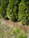 palisada wiklinowa,płotek 100x20, producent Wysokość 20 cm