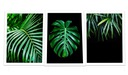 ГРАФИКА ПЛАКАТ А3+рамка растения листья МОНСТЕРА