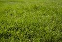 Nawóz trawniki zachwaszczone 10kg chwasty Agrecol