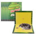 Лапка мыши, крысы, Клей myszołapka lep