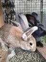 Pasza dla królików KRÓLIK TUCZ 25kg karma Waga produktu z opakowaniem jednostkowym 25 kg