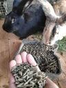 Pasza dla królików KRÓLIK TUCZ 25kg karma Kod producenta PASZA KRÓLIK TUCZ GRANULAT PIAST