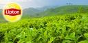 Zielona Herbata Lipton Green Tea Citrus 100 kopert Marka Lipton