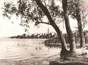 EŁK -- PANORAMA -- DRZEWO -- 1962