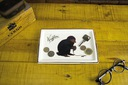 Tacka na biżuterie Niffler organizer na biżuterie Marka Paladone