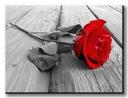 красная роза на стоянке Изображение холст 80x60 см