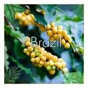 Kawa BRAZYLIA 2kg ŚWIEŻO Palona 100% ARABIKA Waga 2000 g