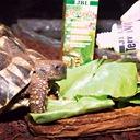JBL TerraVit witaminy i pierwiastki śladowe 50ml Marka JBL