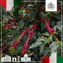 Kawa Ziarnista LA STORIA d'ORO 1kg ŚWIEŻO PALONA Waga 1000 g