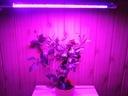Lampa do uprawy roślin GROW LED 11W 60LED IP65 PL EAN 5901793695242