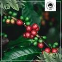 Kawa ZIARNISTA 2kg ŚWIEŻO PALONA Arabika 100% Waga 2000 g