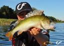 FishUp Catfish 2' 55mm Watermelon Brown Black #043 Nazwa koloru producenta Watermelon Brown Black #043