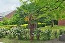 МОРОЗОСТОЙКАЯ ПАЛЬМА! Trachycarpus fortunei РАССАДА
