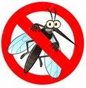 Кошачья мята отпугивает комаров, моль клещи рассада