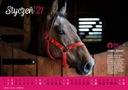 SUPER CENA ZA 2 SZT! 2 kalendarze Ratuj Konie 2021 Producent viva druk