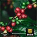 Kawa Ziarnista CREMA & AROMA DOPPIO 1kg Gatunek kawy Arabica