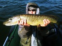 Water King Stynka 5cm Kolor 08 Kod producenta WKST-08