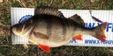 FishUp Tanta 1' 22mm Lox Green Black #016 Nazwa koloru producenta Lox Green Black #016