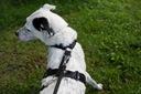 SZELKI GUARD DLA PSA NELSON-X DUO JAKOŚĆ L Wielkość psa średni pies