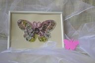 Obrazek z motylem w białej ramce