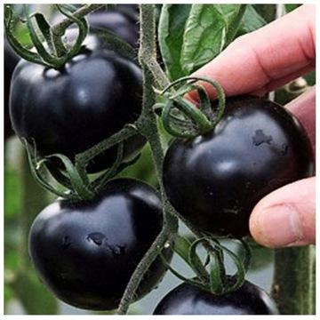 BLACK CHERRY Помидор Черный Сладкий Коктейль БИО. доставка товаров из Польши и Allegro на русском